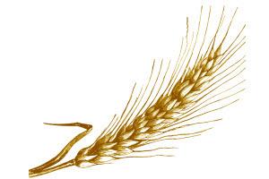 Fenntartható és a környezetet nem károsító fejlődést kell megvalósítani a mezőgazdaságban - vélik az európai növénynemesítők szervezetének (Eucarpia) a Magyar Tudományos Akadémia székházában tanácskozó 19. kongresszusának résztvevői martonvásári látogatásukat követően szerdán.