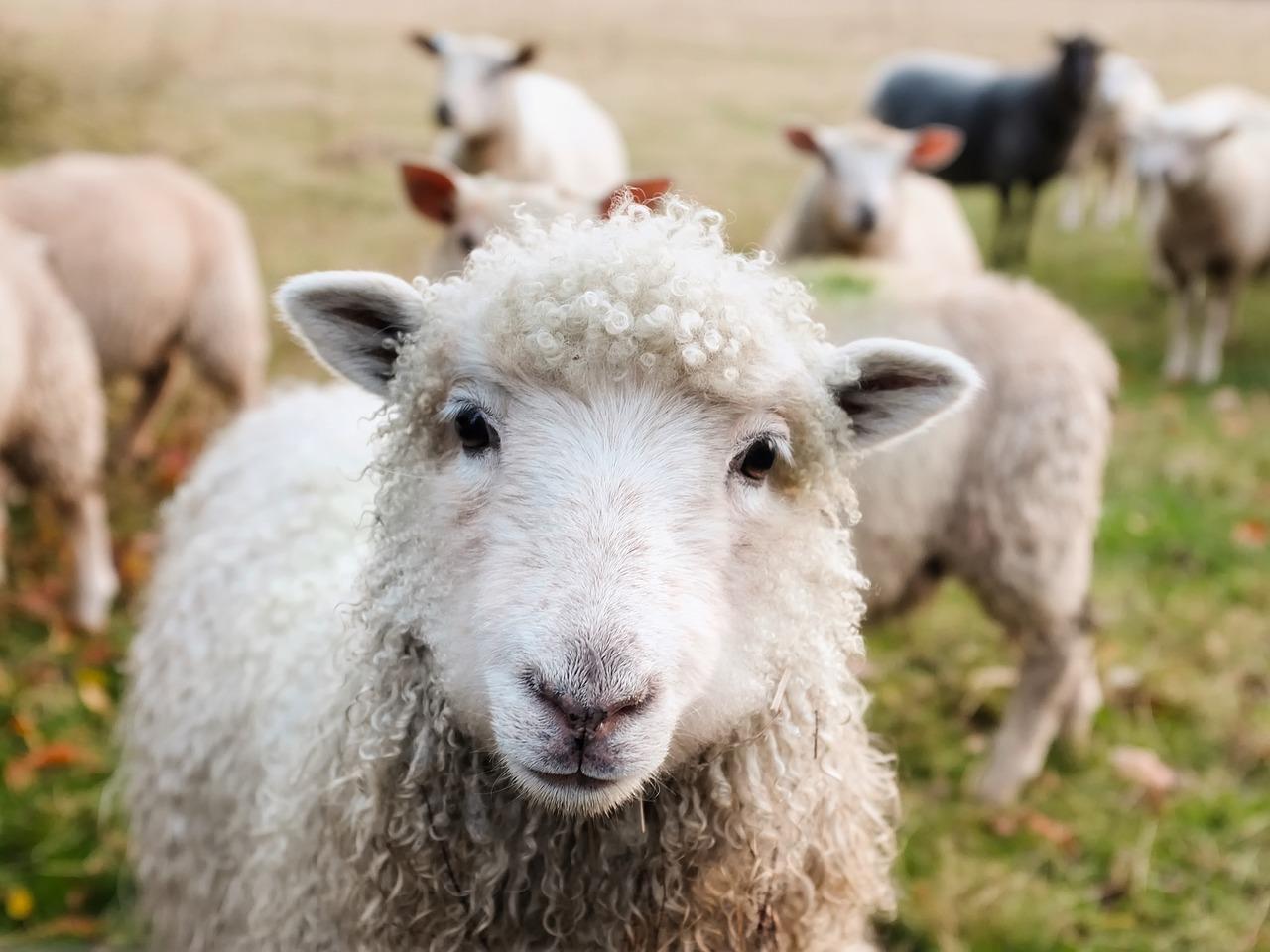 juhok fogyása okozza)