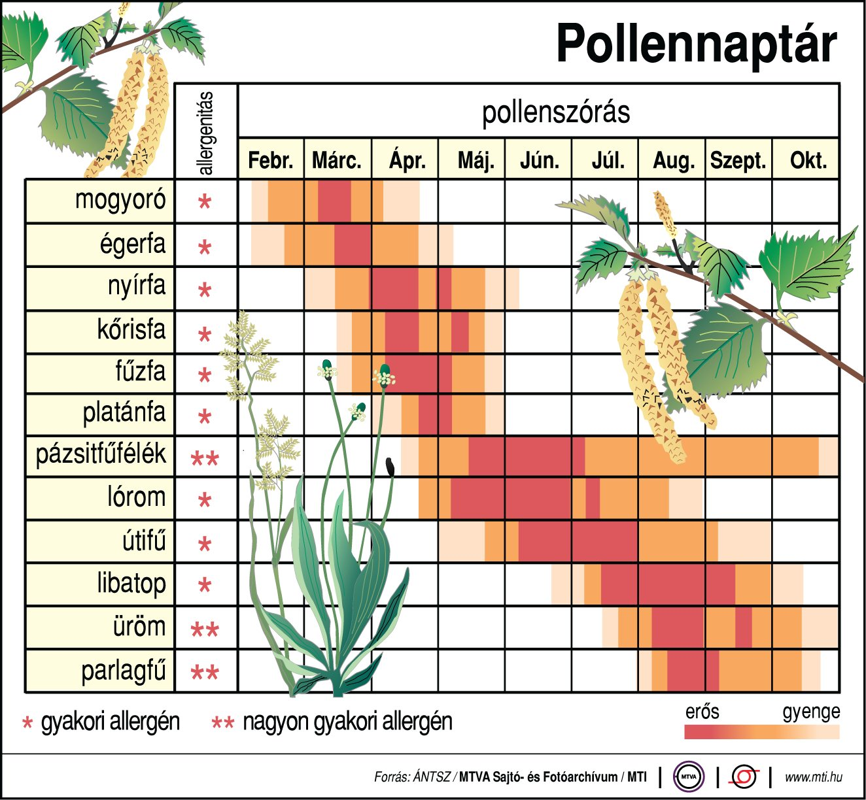 Akár fél óra alatt is le lehet égni a napsütésben a hétvégén és kezdődik a pázsitfűfélék pollenszórása is 3