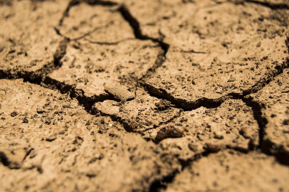Agrometeorológia: a baktériumoknak kedvez az idő 2