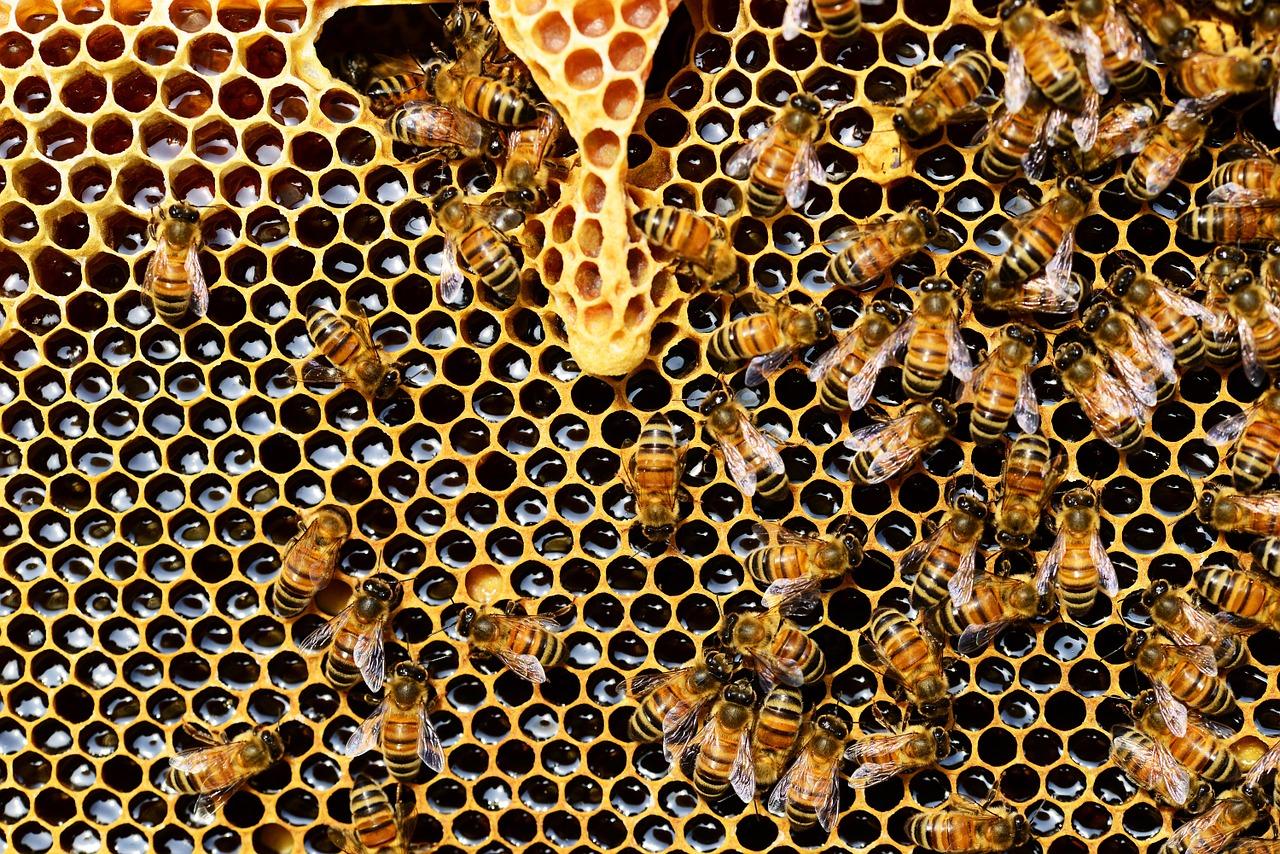 Péntekig igényelje a méhanya-támogatást 2