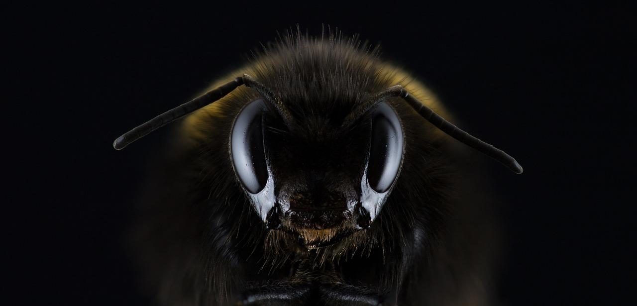 Megmagyarázhatatlan a hazai méhpusztulás 2