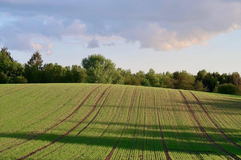 Év végén se húzza vissza a mezőgazdaság a GDP-t 2