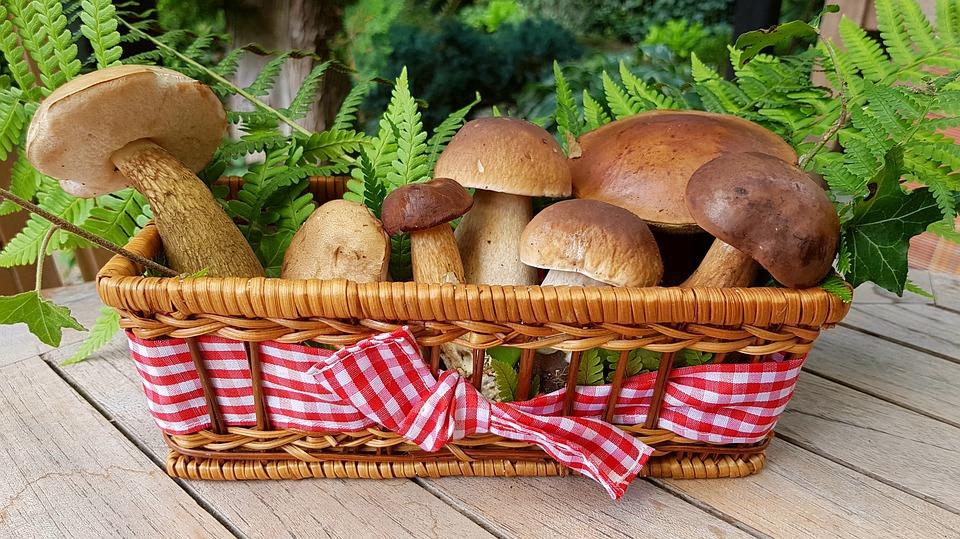 A német fogyasztók szívesen fogyasztják a gombát 2