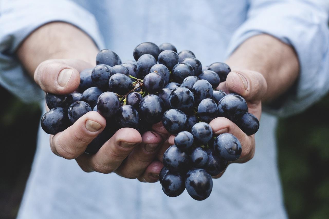 Az argentin borászok nem szenvednek a szürettől 2